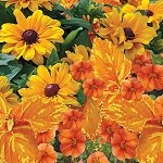 Sunburst Perfect Planter Designer Combination