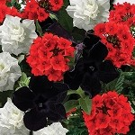 Black Tie Perfect Planter Designer Combination