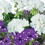 Rhapsody Perfect Planter Designer Combination